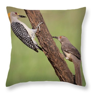 The Stare Down Throw Pillow