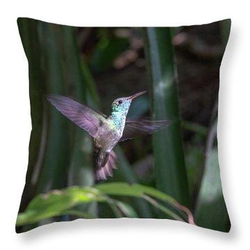 Versicolored Emerald Hummingbird Hovers Throw Pillow