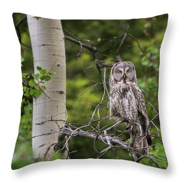 B14 Throw Pillow