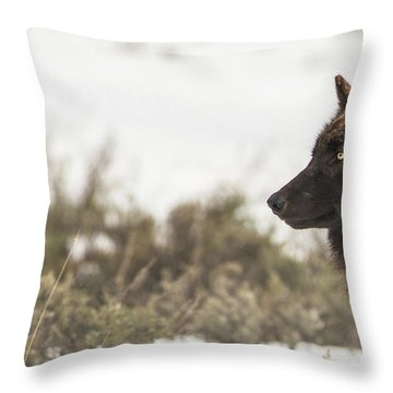 W15 Throw Pillow
