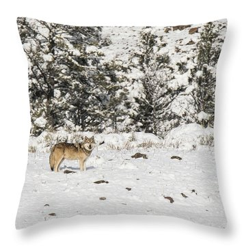 W16 Throw Pillow