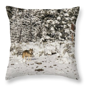 W20 Throw Pillow