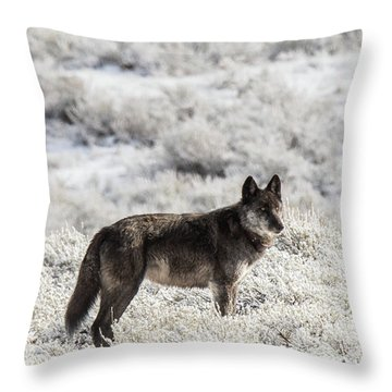 W23 Throw Pillow