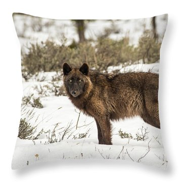 W7 Throw Pillow