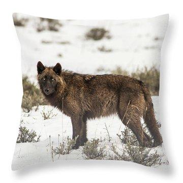 W8 Throw Pillow