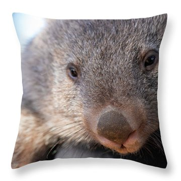 Throw Pillow featuring the photograph Wombat Outside During The Day. by Rob D Imagery
