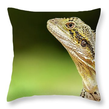 Throw Pillow featuring the photograph Eastern Water Dragon Lizard by Rob D Imagery