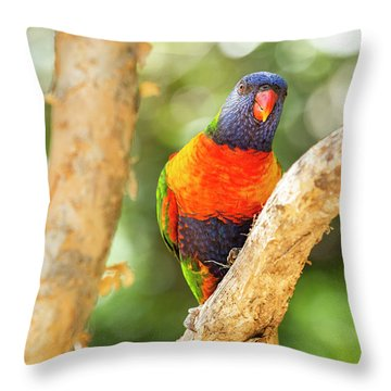 Throw Pillow featuring the photograph Rainbow Lorikeet by Rob D Imagery