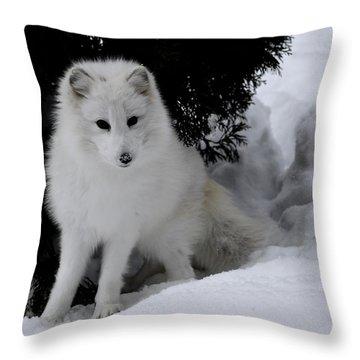 Artic Fox Throw Pillow