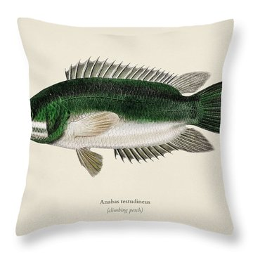 Climbing Perch  Anabas Testudineus  Illustrated By Charles Dessalines D  Orbigny  1806-1876  2 Throw Pillow