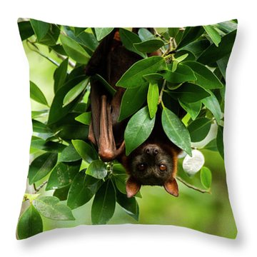 Throw Pillow featuring the photograph Flying Fox Bat by Rob D Imagery
