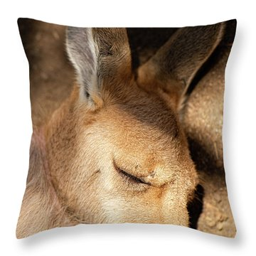 Throw Pillow featuring the photograph Kangaroo Joey by Rob D Imagery