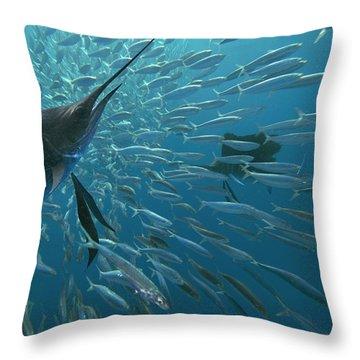 Sailfish Hunting Round Sardinella, Isla Throw Pillow