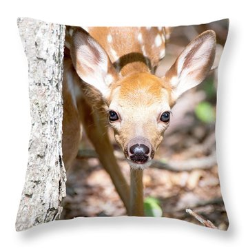White-tailed Deer Fawn, Animal Portrait Throw Pillow