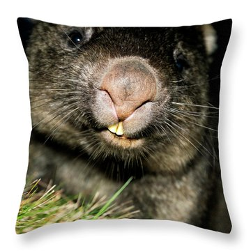 Throw Pillow featuring the photograph Wombat At Night by Rob D Imagery