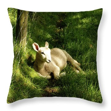 20/06/14  Keswick. Lamb In The Woods. Throw Pillow