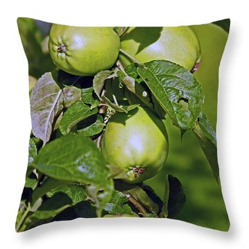 21/07/14  Chorley.  Astley Hall. Throw Pillow