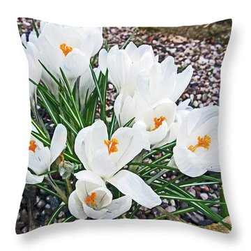 25/03/18  Ramsbottom Chocolate Festival. White Crocuses. Throw Pillow