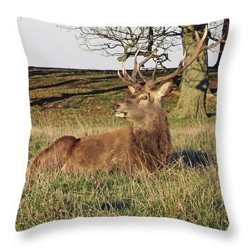 28/11/18  Tatton Park. Stag In The Park. Throw Pillow
