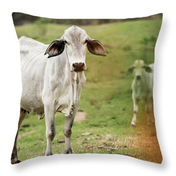 Throw Pillow featuring the photograph Australian Cow by Rob D Imagery