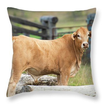 Throw Pillow featuring the photograph Bull In The Country Side. by Rob D Imagery