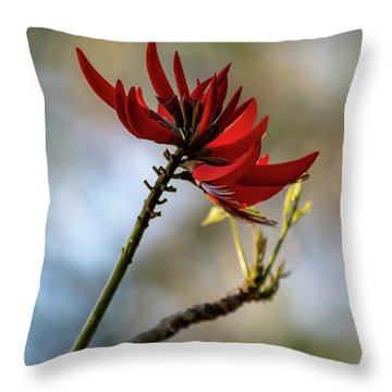 Coral Tree Flowers Throw Pillow