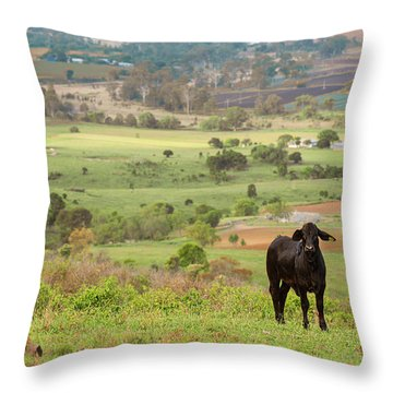Throw Pillow featuring the photograph Cow Outside In The Paddock by Rob D Imagery
