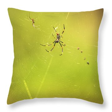Throw Pillow featuring the photograph Golden Orb Spider. by Rob D Imagery
