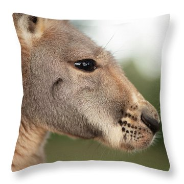 Throw Pillow featuring the photograph Kangaroo Outside During The Day Time. by Rob D Imagery