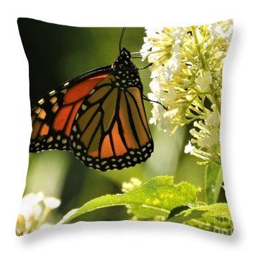 M White Flowers Collection No. W12 - Monarch Butterfly Sipping Nectar Throw Pillow
