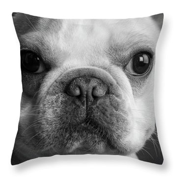 Portrait Of A French Bulldog Throw Pillow