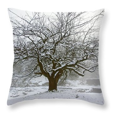 30/01/19  Rivington.  Japanese Pool. Snow Clad Tree. Throw Pillow