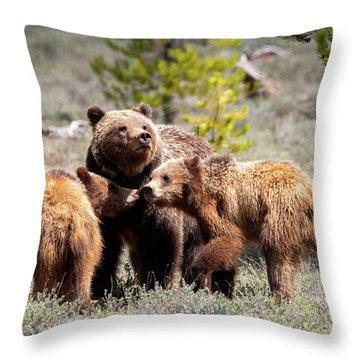 399 And Cubs Throw Pillow