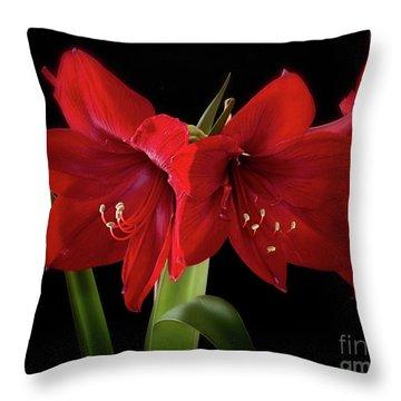 Amaryllis Merlot' Throw Pillow