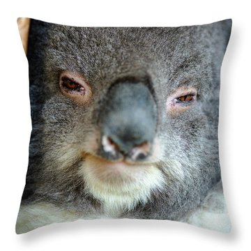 Throw Pillow featuring the photograph Cute Australian Koala Resting During The Day. by Rob D Imagery