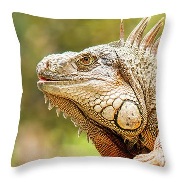 Throw Pillow featuring the photograph Green Iguana by Rob D Imagery