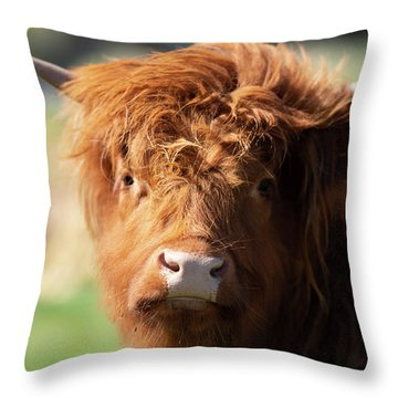 Throw Pillow featuring the photograph Highland Cow On The Farm by Rob D Imagery