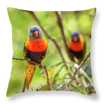Throw Pillow featuring the photograph Rainbow Lorikeets by Rob D Imagery