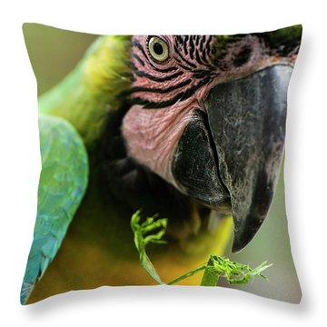 Throw Pillow featuring the photograph Beautiful Macaw Bird by Rob D Imagery