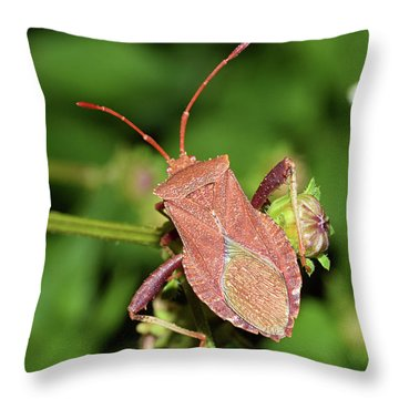 Leaf Footed Bug Throw Pillow