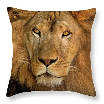 Throw Pillow featuring the photograph 656250006 African Lion Panthera Leo Wildlife Rescue by Dave Welling