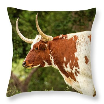 Throw Pillow featuring the photograph Longhorn Bull In The Paddock by Rob D Imagery