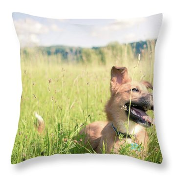 A Dog In The Park Throw Pillow