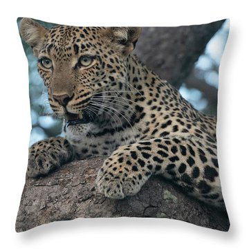 A Focused Leopard Throw Pillow