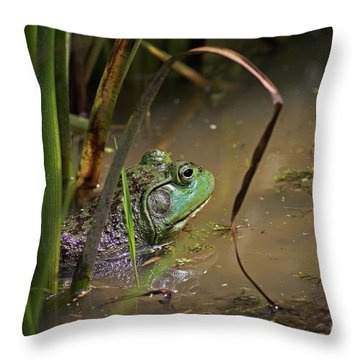 A Frog Waits Throw Pillow