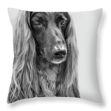 A Kind And Regal Spirit Throw Pillow