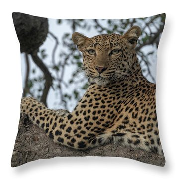 A Leopard Gazes From A Tree Throw Pillow