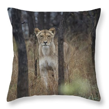 A Lioness In The Trees Throw Pillow