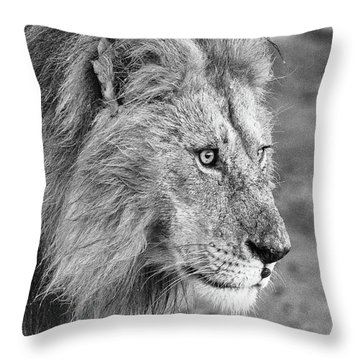 A Monochrome Male Lion Throw Pillow
