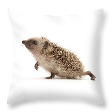Throw Pillow featuring the photograph A Prickly Problem by Warren Photographic
